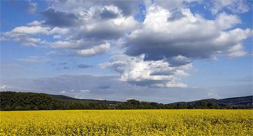 Rapsfeld nahe Hofwiesen