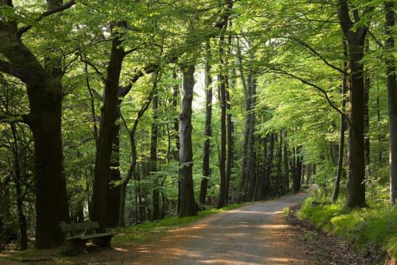 Weg von Bückeburg nach Bad Eilsen